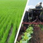Agricultura de la region orinoquia