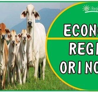 actividades economicas de la region orinoquia