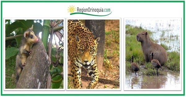 animales de la region orinoquia