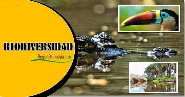 Diversidad de flora y fauna region orinoquia de la