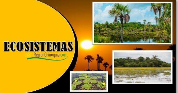Cual es el ecosistema mas representativo de la region Orinoquia