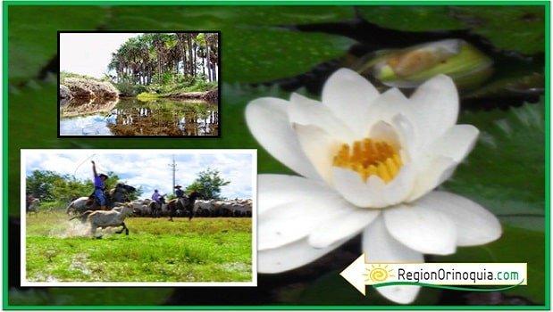 especies vegetales region orinoquia