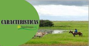 Cuales son las caracteristicas principales de la Region Orinoquia