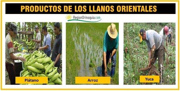 productos agricolas de la region orinoquia