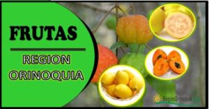 Frutas de la region Orinoquia